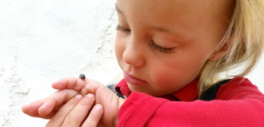 child looking at insect