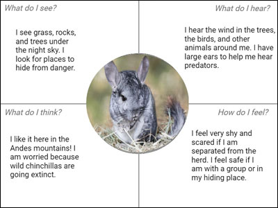 sample chinchilla empathy map